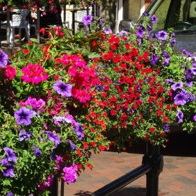 Wrought iron street furniture topped by a Floral Godalming planter with purple petunias, pink geraniums, blue lobelia and other red flowers in full flower