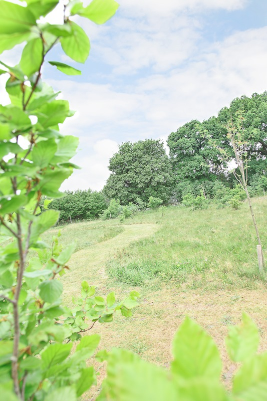 Eashing Cemetery - Natural Burial Area showing the curving path through longer grassed area with trees in the background