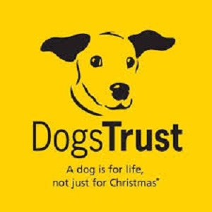 Dogs Trust - A dog is for life, not just for Christmas*